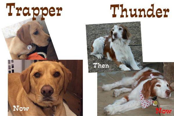 Trapper_Thunder