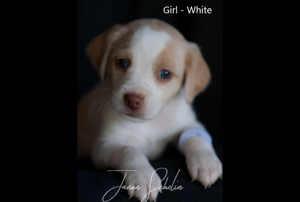 Puppy, Girl, White collar