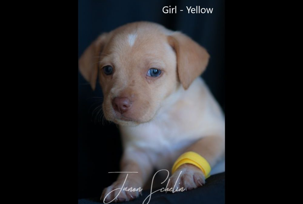 Puppy, Girl, Yellow collar
