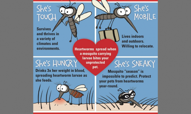 Heartworm Disease Facts